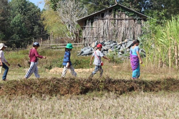A walk through paddy fields ...