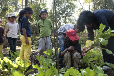 We harvested radishes with Sunita, the force behind Vanastree ...